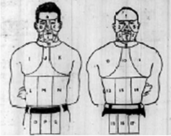 Figure 3. Diagram of the body segments used for the analysis of the Fitzsimmons versus Corbett fight